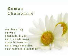 Roman Chamomile does. Doterra Roman Chamomile, Chamomile Essential Oil, Coconut Oil Moisturizer, Coconut Oil For Skin, Essential Oil Companies, Essential Oil Uses, Organic Homemade, Restless Leg Syndrome, All Natural Skin Care