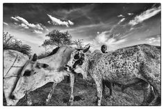 Philippe Geslin, Becoming Massaï… - The Eye of Photography