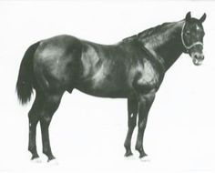 'King p 234' Foundation stallion for Quarter Horse Breed...I had a grandson of this fine specimen of a quarter horse... His name was Bar G King, by Wally's Champ...