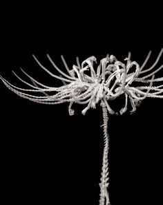 """Bone Flowers are made from real bones of mice and rats. Japanese artist Hideki Tokushige states that the collection, called """"Honebana"""" (bone flower), is the result of a ceremonial process that honors the cycle of death, decay, and rebirth, even as modern society becomes increasingly detached from this spiritual reality."""