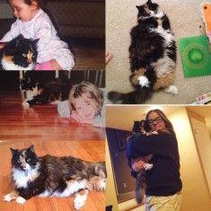 photo avec un chat trop mignon 184 sur http://ift.tt/1oohFRS