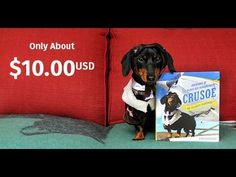 "The Crusoe Book - ""Adventures of the Wiener Dog Extraordinaire"" - YouTube (Would love his book!)"