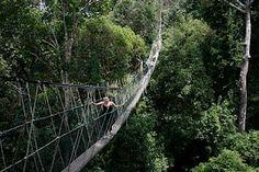 Taman Negara National Park, Malaysia (Worlds longest suspension bridge)