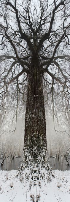 Then the first snow came and he went out to brush the snow away so it wouldn't die..came runnin in all excited tripped and almost hurt himself and I laughed till I cried..and honey I miss you and I'm bein good and Ide love to be with you if only I could,Druids Trees:  #Totem-trees.