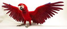 Made to Order Needle Felted Parrot: Custom by TheWoolenWagon
