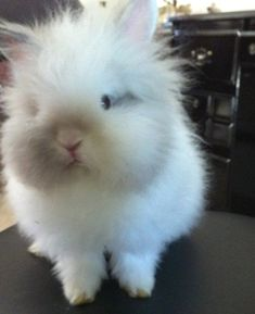 Stunning rabbit