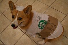 Lily - Halloween Photo Contest - #corgi