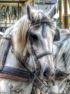 The Barcelona hourse by Donibane #hourse #animal #caballo #barcelona #donibane