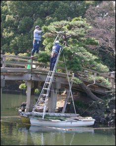 What never saw a ladder in a boat before? Building Fails, Boat Building, Safety Fail, People Doing Stupid Things, Construction Fails, Job Fails, Darwin Awards, Safety First, Weird Pictures