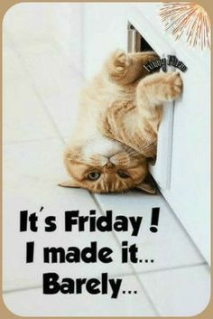 Happy Friday Meme Funny, Friday Funny Images, Happy Friday Pictures, Happy Friday Quotes, Friday Humor, Funny Happy, Friday Cat, Tgif Meme, Funny Weekend