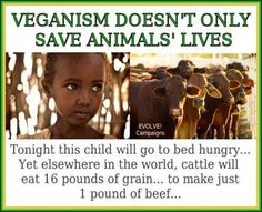 Veganism doesn't only save animals' lives. Tonight this child will go to bed hungry. Yet elsewhere in the world, cattle will eat 16 pounds of grain ... to make just 1 pound of beef ...