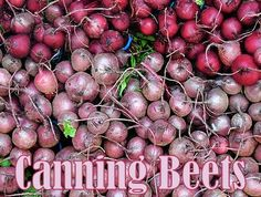 beets for canning/ tomato basil sauce/ spicy green beans