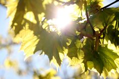 Scientists blend photosynthesis and quantum physics to improve solar cells