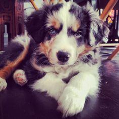 Pretty puppy.