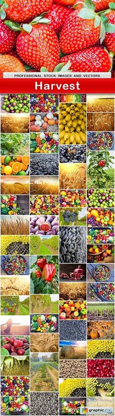 Harvest  62 UHQ JPEG  stock images