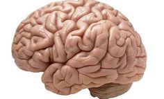 'Ondanks een toenemende belangstelling voor de gevolgen op lange termijn van trauma op de hersenen, is er nog maar weinig bekend over de effecten op sociaal gedrag', schrijft Anna Hudson van de blog Mensenkennis.be.