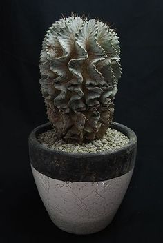 Cactus and Succulents 428