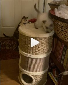 What Cat, Dancing Cat, Kitten Rescue, Funny Laugh, Funny Dogs, Cute Cats, Charity, Kittens, Pets