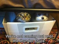 Kitten, Cat, Dog, Animal, Whiskers: We're not coming out unti the-thunder stops re not Coming Out unt