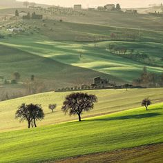 #landscape #paesaggio #Marche #italia #italy #tree #trees #hill #house #home #rural #casa #rurale #colline #marchigiane #natgeo #nature #marchetourism #igers #italian #green #grass #morning #day #sunrise by massimo_feliziani