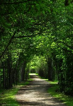 Sérénité et lumière..... Beautiful World, Beautiful Places, Beautiful Pictures, Landscape Photography, Nature Photography, Tree Tunnel, Image Nature, Nature Nature, Pathways