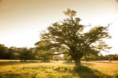 This is the beautiful Hatfield Forest! If you fancy joining us for a stroll here then why not come to our Miles event on 14th September 2013.