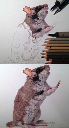épinglé par ❃❀CM❁✿⊱Illustration done by Karla Mialynne. Animal Paintings, Animal Drawings, Pencil Drawings, Art Drawings, Colored Pencil Artwork, Color Pencil Art, Colored Pencils, Crayons Pastel, Pastel Pencils