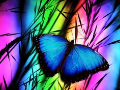 Is your Fibromyalgia really undiagnosed Hashimoto& Thyroid Disease? Discover how the Fibromyalgia Low Thyroid Connection could be affecting your health. Blue Butterfly, Butterfly Wings, Morpho Butterfly, Blue Morpho, Fabric Butterfly, Wise Quotes About Life, Wise Sayings, Life Quotes, Vertigo Causes