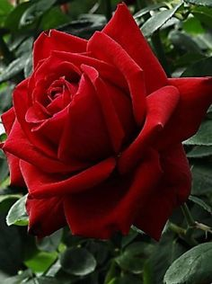 Per la meba germana estimada ROSITA epd 11/11/16 amb dolor in amor jordi   Rufafa Biayna.