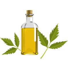 www.trellishorticulture.com/neem-oil.php - Neem oil is a safe and non-toxic insecticide. We supply 100% natural neem oil made from neem seeds and it contains 0.03% of Azadirachta indica.