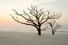 beach-trees-at-botany-bay-south-carolina-bill-swindaman.jpg (900×600)