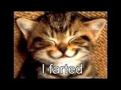 Image result for cute animals and quotes i just farted