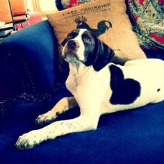 Animals With Heart-Shaped Markings (Pictures)