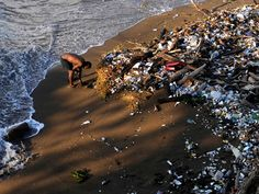 Volunteers help collect rubbish at the beach in Santo Domingo on the annual coastal cleanup day