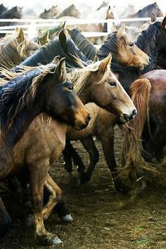 Horses in tints, tones and shades of brown.