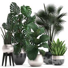 Best Indoor Plants, Indoor Planters, Exotic Plants, Cafe Plants, Garden Plants, Interior Garden, Interior Plants, House Plants Decor, Plant Decor