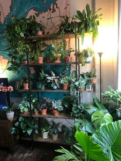 some of my collection : houseplants Room With Plants, House Plants Decor, Plant Decor, Room Design Bedroom, Room Ideas Bedroom, Bedroom Decor, Plant Aesthetic, Aesthetic Room Decor, Indoor Plants