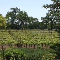 Duckhorn Winery.