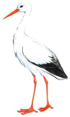 Bird Drawings, Animal Drawings, Cartoon Pics, Cute Cartoon, Beautiful Drawings, Beautiful Birds, Bird Coloring Pages, Personalised Christmas Cards, Beginner Painting