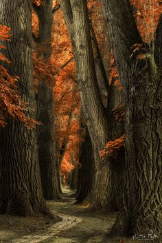Deciduous Oak forest stone trail I'll find my way . ~ by Martin Podt Beautiful World, Beautiful Places, Beautiful Scenery, Landscape Photography, Nature Photography, Cool Pictures, Beautiful Pictures, Tree Forest, Oak Forest