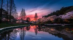 Sakura Sunset - Japanese scenery of the sunset of spring. You will be surprised to see the beautiful scenery. This place is a suburb of Shizuoka Prefecture. Spring of Japan will bloom cherry. Sakura will be seen everywhere in Japan.
