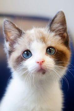 kleine Katze, ein Auge blau, das andere grün...