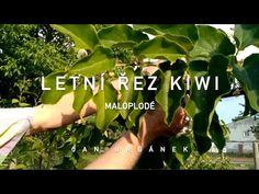 Jan Urbánek - pěstitel - YouTube Kiwi, Holding Hands, Youtube, Youtubers, Youtube Movies