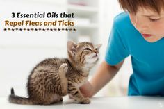 The best way to stop fleas and ticks is to use a Nebulizing Diffuser® and prevent them before they become a problem. A nebulizer is strong and powerful releasing pure essential oils creating an ...