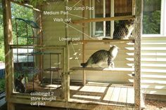 Outdoor Cat Habitat Cat and Dog Lovers Ideas Of Diy Cat Enclosure - Animais Outdoor Cat Habitat, Outdoor Cats, Outdoor Cat Cage, Outdoor Play, Dog Habitat, Outdoor Spaces, Outdoor Decor, Diy Cat Enclosure, Outdoor Cat Enclosure