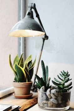 Indoor plants, cactus, and house plants. All the green and growing potted plants. Foliage and botanical design Green Plants, Air Plants, Indoor Plants, Indoor Cactus, Cactus Plante, Plants Are Friends, Decoration Inspiration, Interior Plants, Kitchen Interior