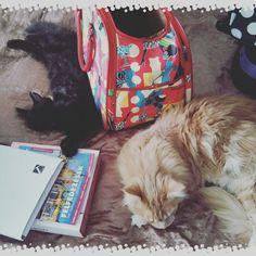 Cats MaineCoon Travel