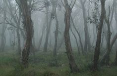 Australian bush spirits