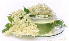 17 Ideas De Sauco Plantas Medicinales Plantas Flores