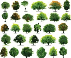 Illustration about Vector trees isolated on white background. Illustration of elements, palm, landscape - 5190669
